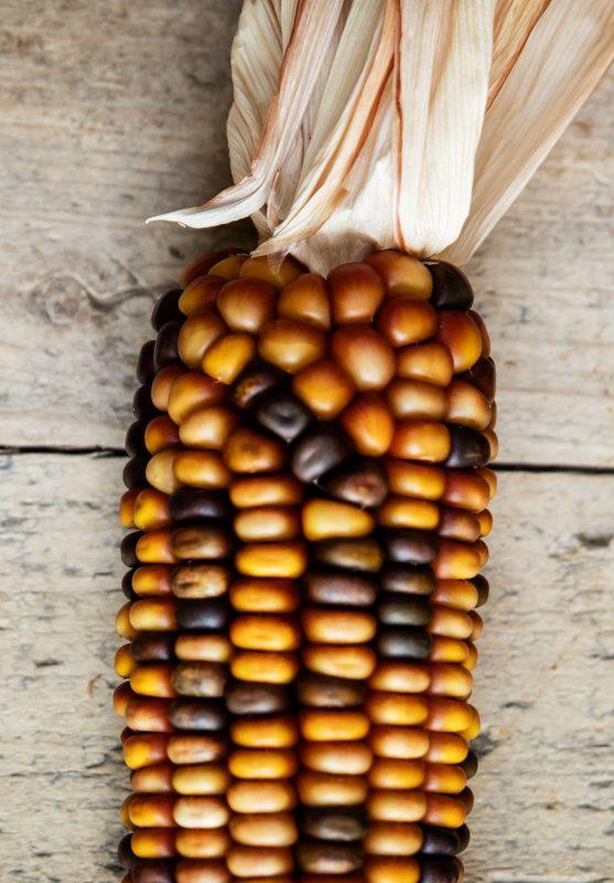 Granos, Cereales y Legumbres
